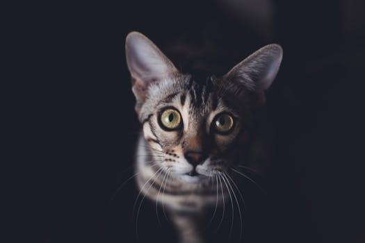 startledcat